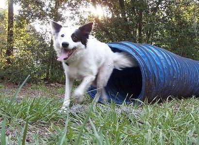 Hond Vriendelijke Tuin : Hondvriendelijke aan het meer met ingebouwd homeaway